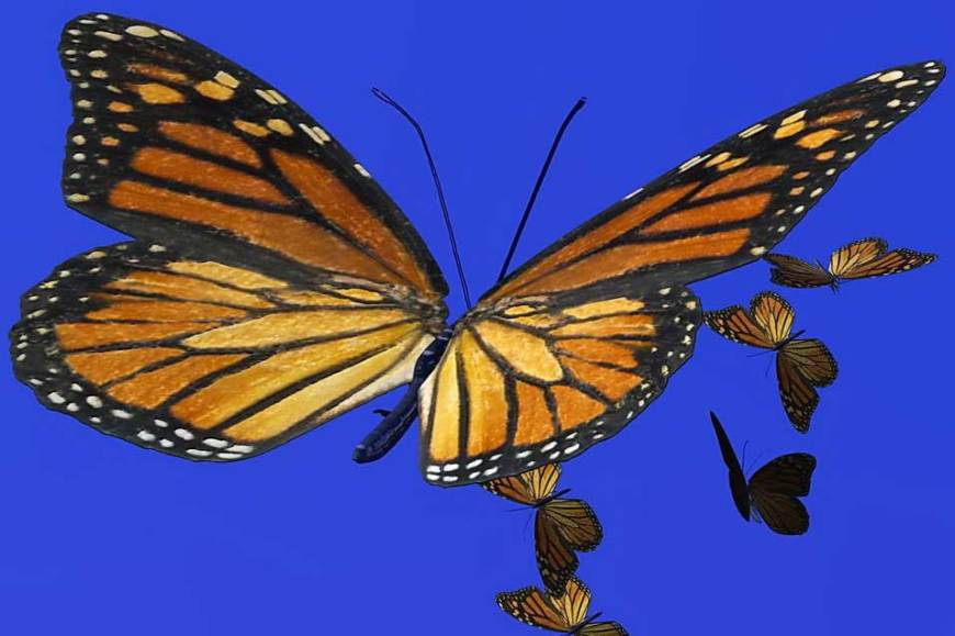 a monarch butterfly in flight with wings spread out